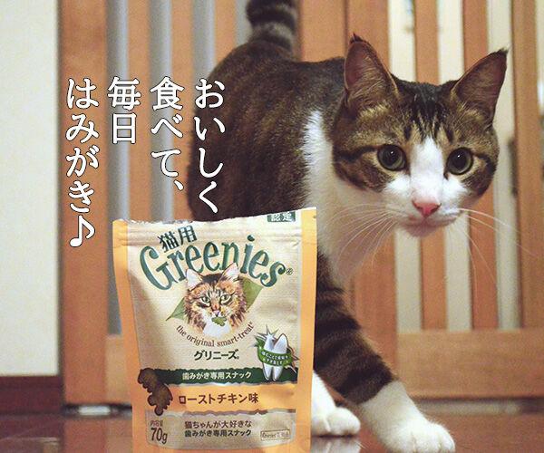 日本で唯一の猫用はみがきスナックは『猫用グリニーズ』なのッ 猫の写真で4コマ漫画 3コマ目ッ