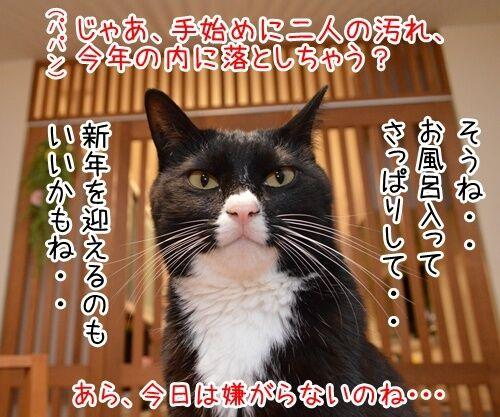 今年の汚れ、今年のうちに 猫の写真で4コマ漫画 3コマ目ッ
