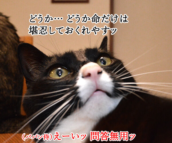 猫侍 其の三 猫の写真で4コマ漫画 1コマ目ッ