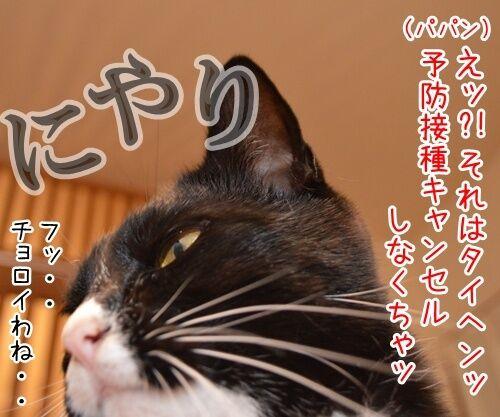 予防接種の日 猫の写真で4コマ漫画 3コマ目ッ