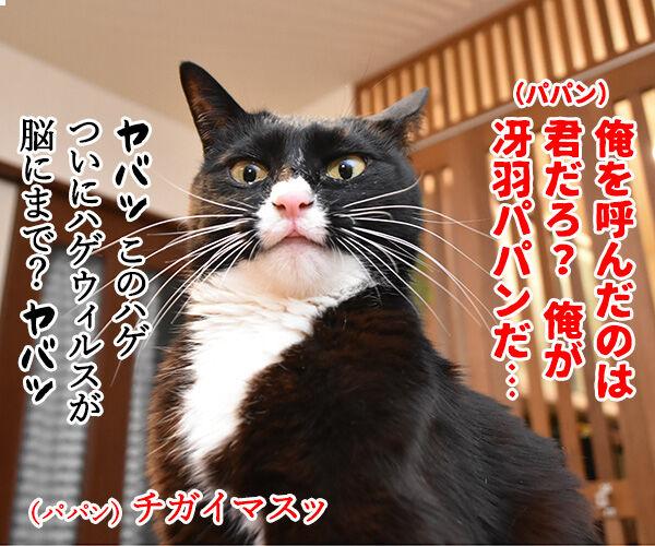 劇場版シティハンターは大ヒット上映中なのよッ 猫の写真で4コマ漫画 1コマ目ッ