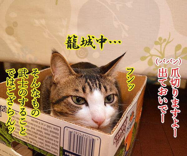 猫侍 其の一 猫の写真で4コマ漫画 1コマ目ッ
