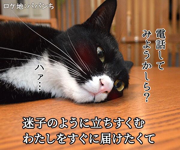 恋に落ちて 猫の写真で4コマ漫画 2コマ目ッ