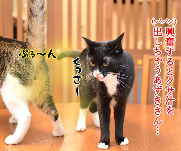 クサ汁 猫の写真で4コマ漫画 1コマ目ッ