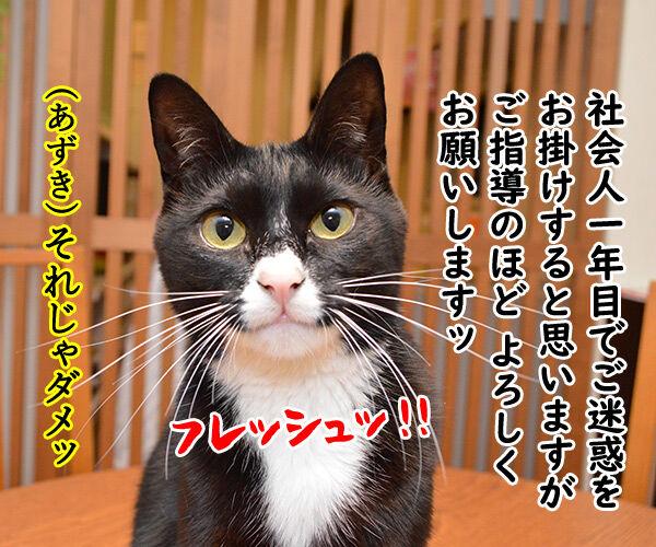 新人あいさつ 猫の写真で4コマ漫画 2コマ目ッ