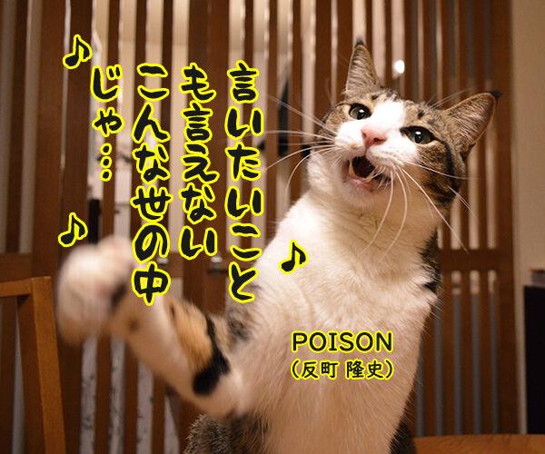 ポイズン 猫の写真で4コマ漫画 3コマ目ッ