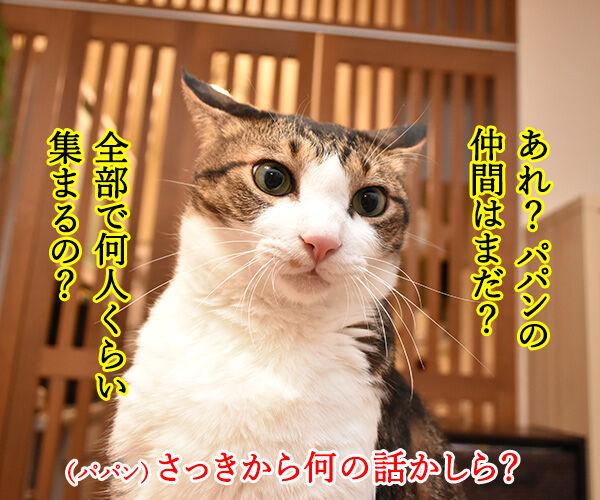 今日限定でステキなプレゼントがもらえる『○○○の日』 猫の写真で4コマ漫画 3コマ目ッ