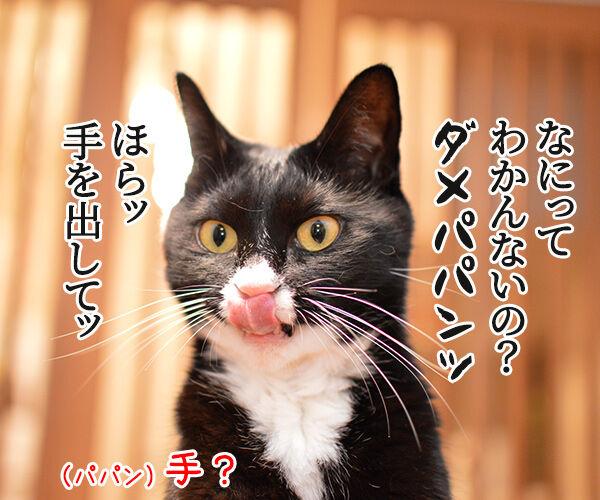 ほらッほらッ 猫の写真で4コマ漫画 2コマ目ッ