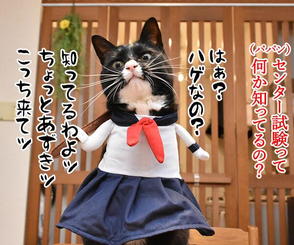 受験生のみんなッ センター試験ガンバルノヨー 猫の写真で4コマ漫画 2コマ目ッ