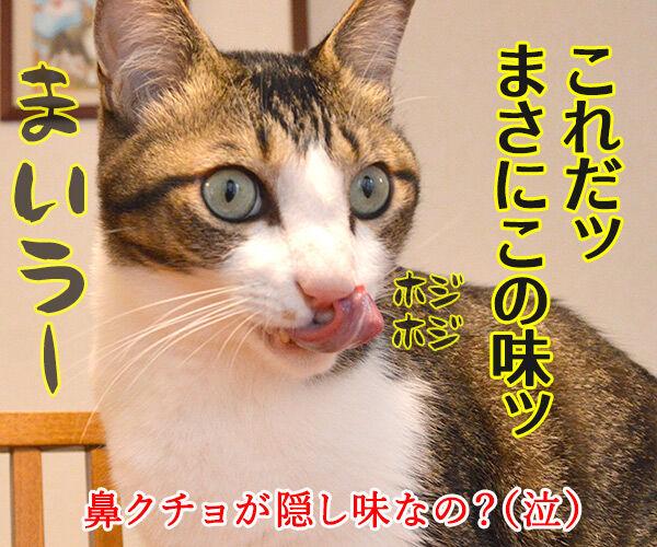 先生、お味はいかがでしょうか? 猫の写真で4コマ漫画 4コマ目ッ