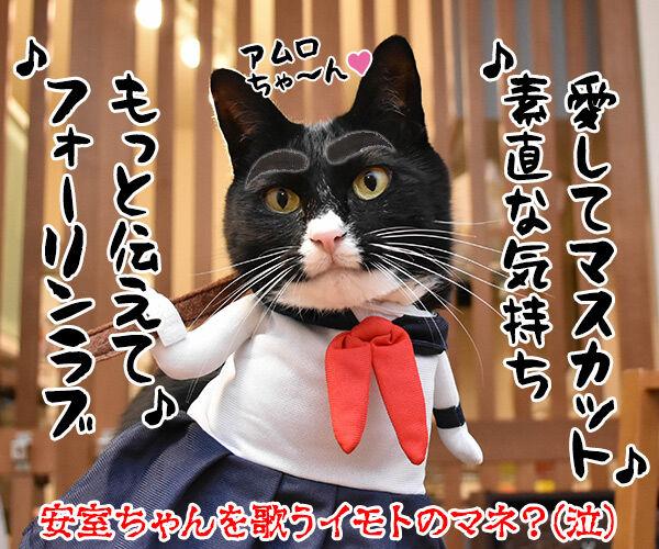 安室ちゃんの歌でどれが好き? 猫の写真で4コマ漫画 4コマ目ッ