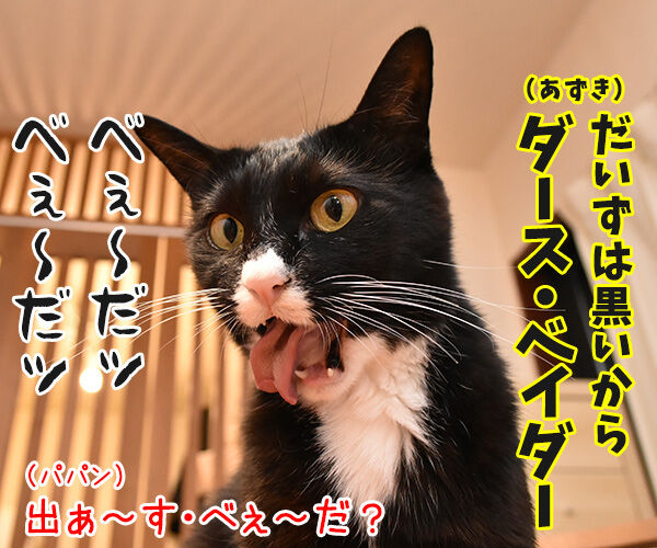 スター・ウォーズごっこするよーッ 猫の写真で4コマ漫画 3コマ目ッ