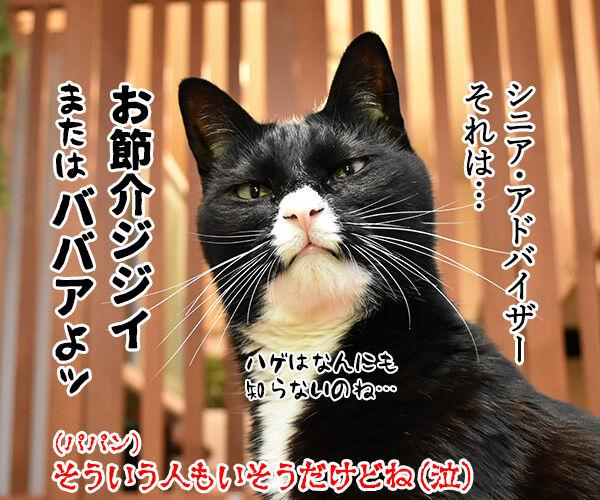 猫さんの7才以上はシニアなんですってッ 猫の写真で4コマ漫画 4コマ目ッ