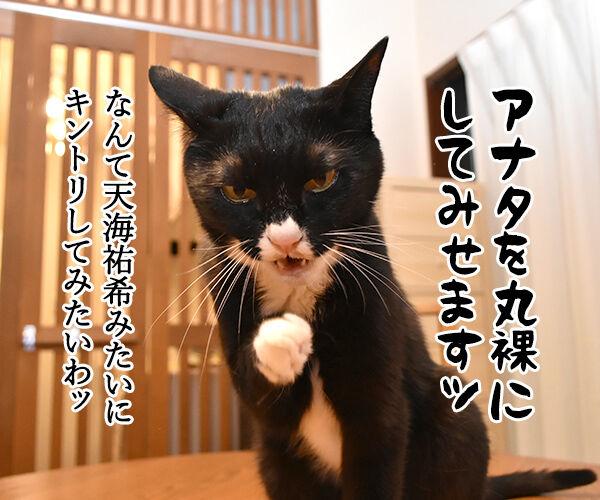 春ドラマのオススメは『緊急取調室』なのよッ 猫の写真で4コマ漫画 2コマ目ッ