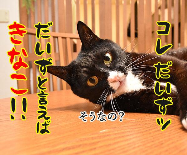 6月16日は『和菓子の日』なんですってッ 猫の写真で4コマ漫画 3コマ目ッ