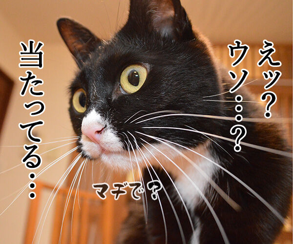 えっ?ウソ?当たってる…… 猫の写真で4コマ漫画 1コマ目ッ
