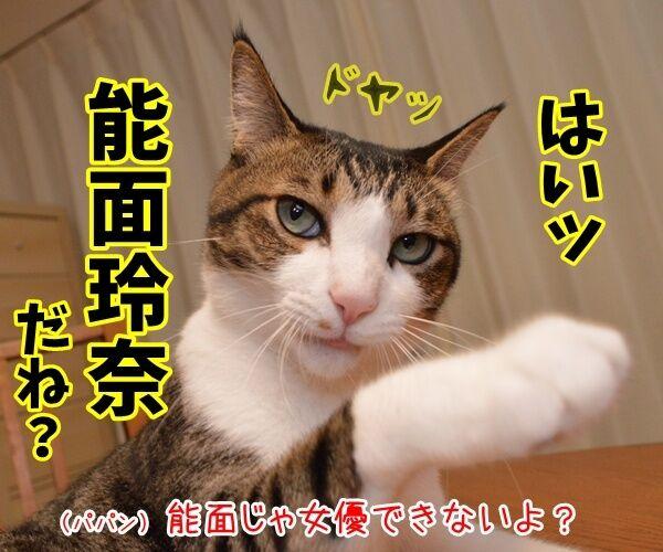 能年玲奈さんが「◯◯」に改名して再出発なんですってッ 猫の写真で4コマ漫画 2コマ目ッ