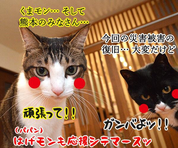 あずきッ いくわよッ 猫の写真で4コマ漫画 4コマ目ッ