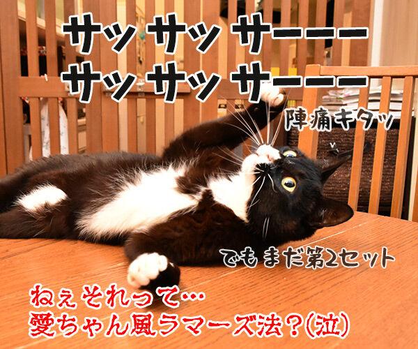福原愛ちゃんがママになったんですってッ 猫の写真で4コマ漫画 4コマ目ッ