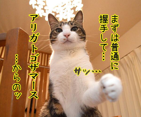 流し目王子の握手会 猫の写真で4コマ漫画 2コマ目ッ