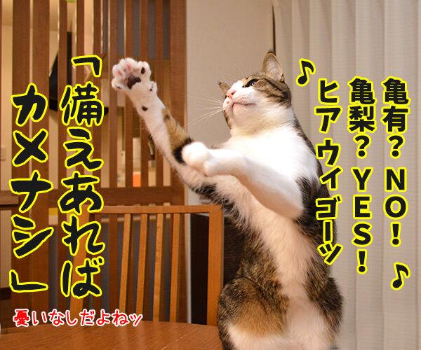 MCあずきのヒップホップ大喜利 猫の写真で4コマ漫画 3コマ目ッ