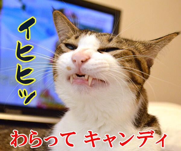 キャンディ キャンディ 猫の写真で4コマ漫画 4コマ目ッ