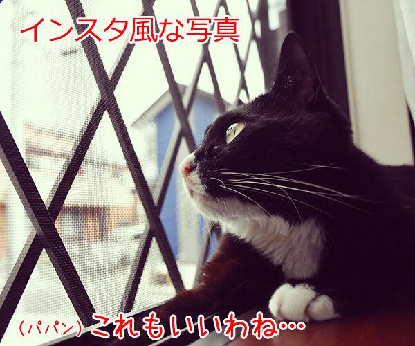 SNSの投稿 〇〇風な写真 猫の写真で4コマ漫画 2コマ目ッ