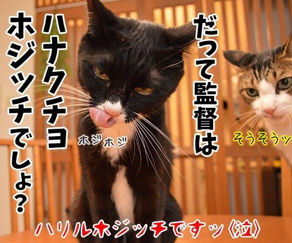 サッカー日本代表は引き分けだったのッ 猫の写真で4コマ漫画 4コマ目ッ