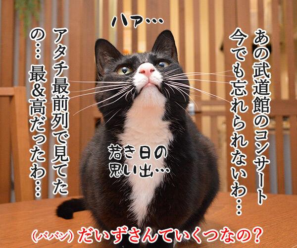 6月29日はビートルズ記念日なんですってッ 猫の写真で4コマ漫画 2コマ目ッ