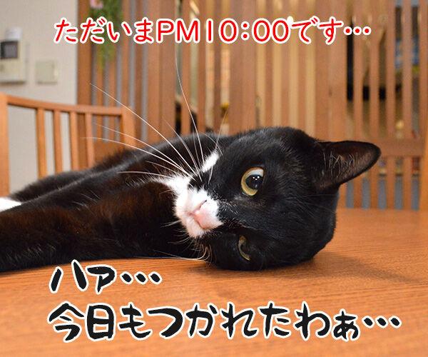 パパンの知らない二人のお仕事 猫の写真で4コマ漫画 1コマ目ッ