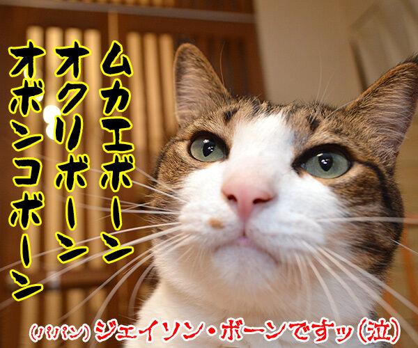 『ボーン』シリーズ最新作『ジェイソン・ボーン』が公開されたのよッ 猫の写真で4コマ漫画 4コマ目ッ