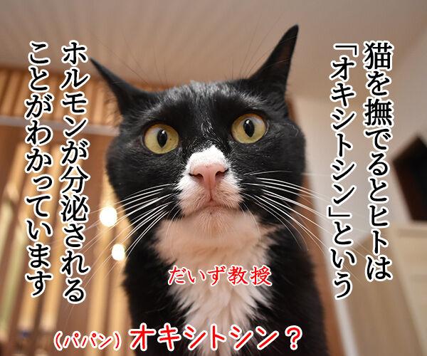 猫さんを撫でると「愛情ホルモン」が出るんですってッ 猫の写真で4コマ漫画 1コマ目ッ
