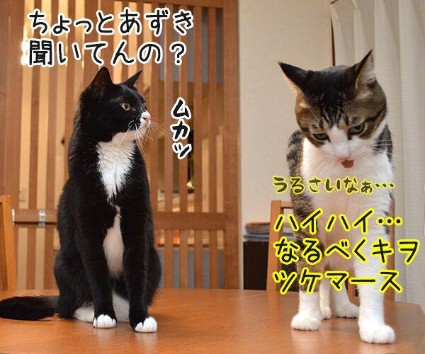 うぅ~ん… 猫の写真で4コマ漫画 2コマ目ッ