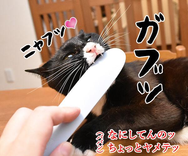 猫さんに大人気の『ねこじゃすり』を買ってみたのッ 猫の写真で4コマ漫画 3コマ目ッ