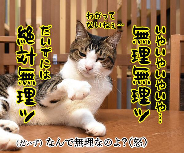 春ドラマのオススメは『緊急取調室』なのよッ 猫の写真で4コマ漫画 3コマ目ッ