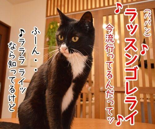 ♪ラッスンゴレライ♪ 猫の写真で4コマ漫画 2コマ目ッ