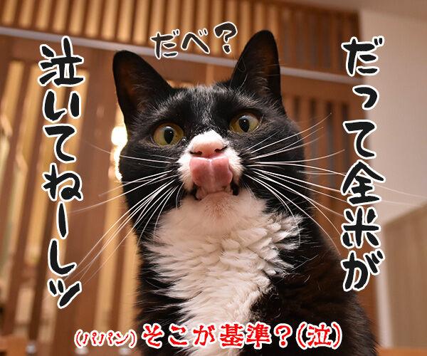 ゴールデンウィークは映画を見ようッ 猫の写真で4コマ漫画 4コマ目ッ