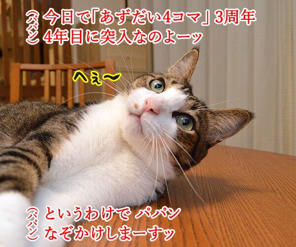 今日から4年目突入デースッ 猫の写真で4コマ漫画 1コマ目ッ