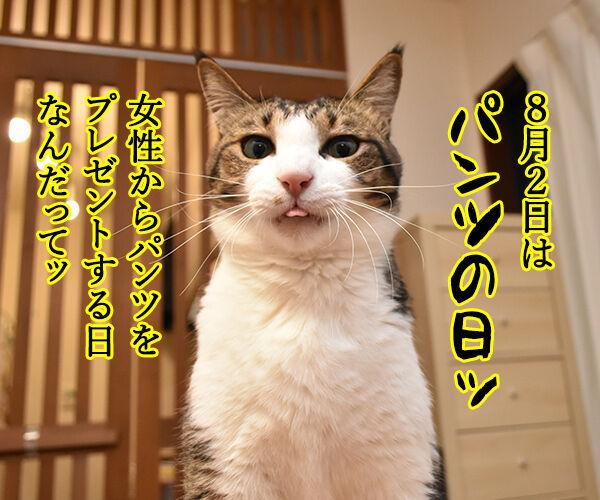 8月2日は何の日かしら? 猫の写真で4コマ漫画 1コマ目ッ