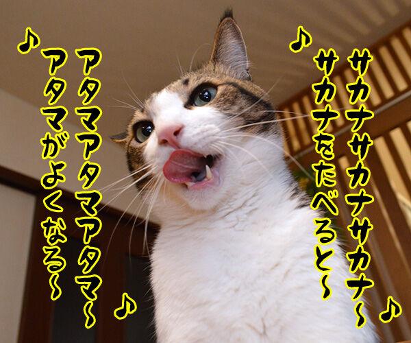 今日の晩ゴハンはおさかな天国ッ 猫の写真で4コマ漫画 2コマ目ッ