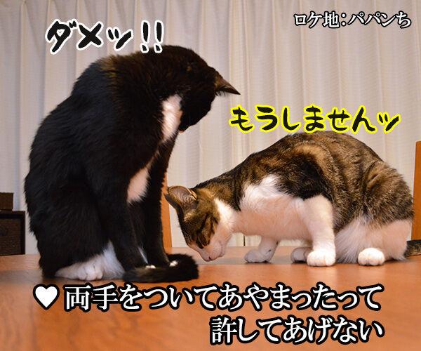 3年目の浮気 猫の写真で4コマ漫画 4コマ目ッ
