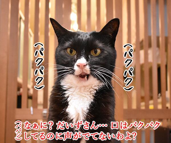それはもしかしてサイレントニャー? 猫の写真で4コマ漫画 1コマ目ッ