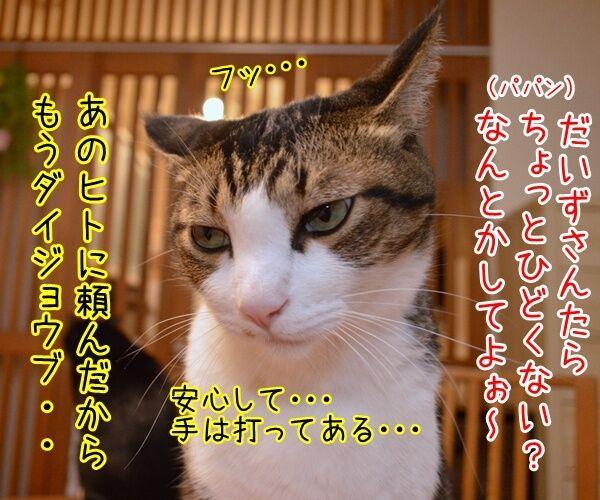 だいず女王様をなんとかしてよッ 猫の写真で4コマ漫画 3コマ目ッ