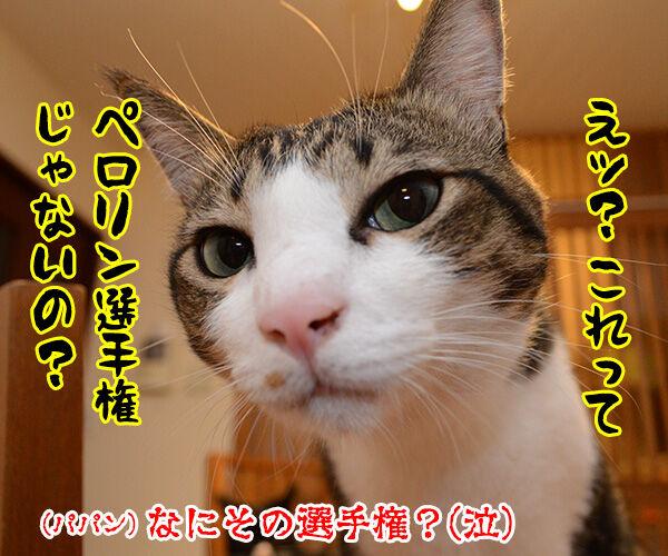 あずきさーんッ 出番ですよーッ 猫の写真で4コマ漫画 4コマ目ッ