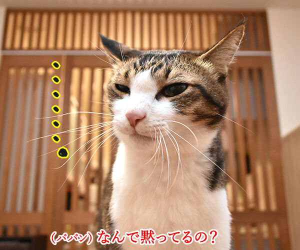 目と目で通じ合う仲になりたいわッ 猫の写真で4コマ漫画 2コマ目ッ