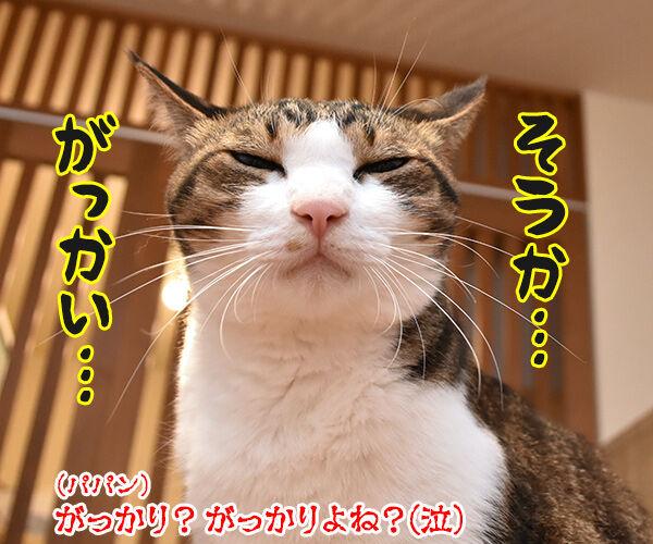 石原さとみさん ご結婚オメデトゴザマース♥ 猫の写真で4コマ漫画 4コマ目ッ