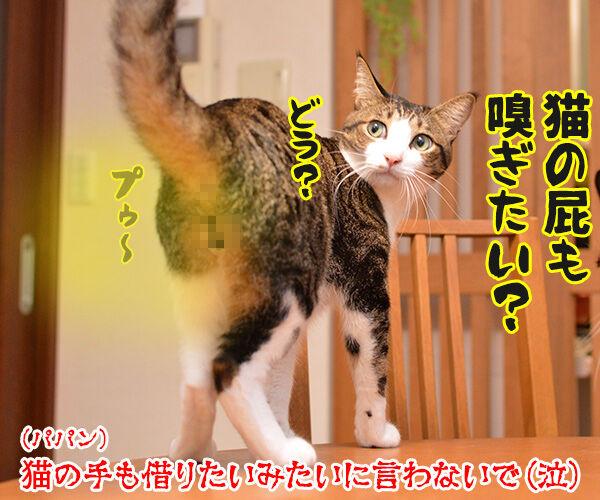 猫の手も借りたいと言うけれど… 猫の写真で4コマ漫画 4コマ目ッ