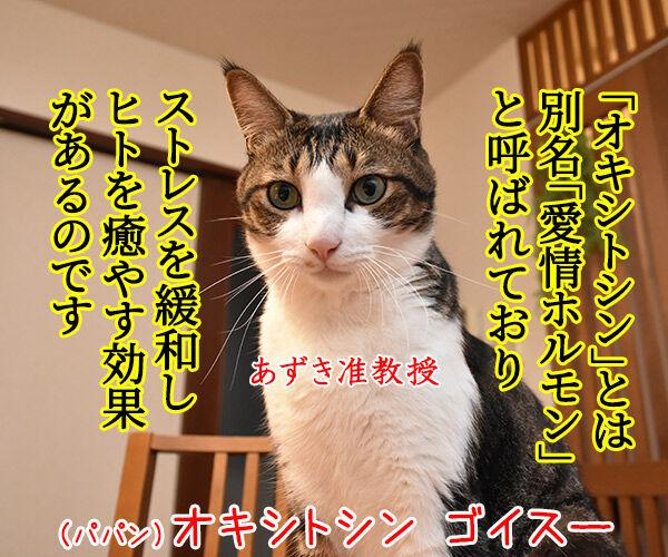猫さんを撫でると「愛情ホルモン」が出るんですってッ 猫の写真で4コマ漫画 2コマ目ッ