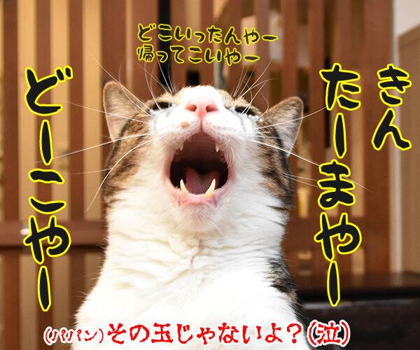 花火が上がった時の掛け声ってどんなだっけ? 猫の写真で4コマ漫画 4コマ目ッ