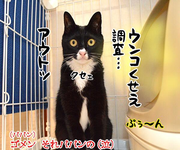 国勢調査は10月7日までなのよッ 猫の写真で4コマ漫画 5コマ目ッ